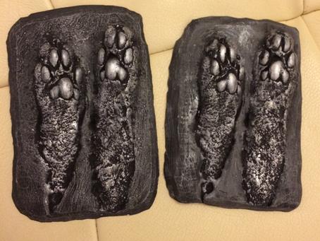 2D pet casting