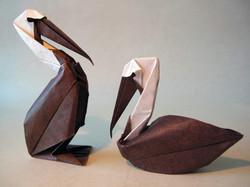 Pelican 06