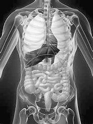 Сделать МРТ томографию брюшной, грудной полости в Москве