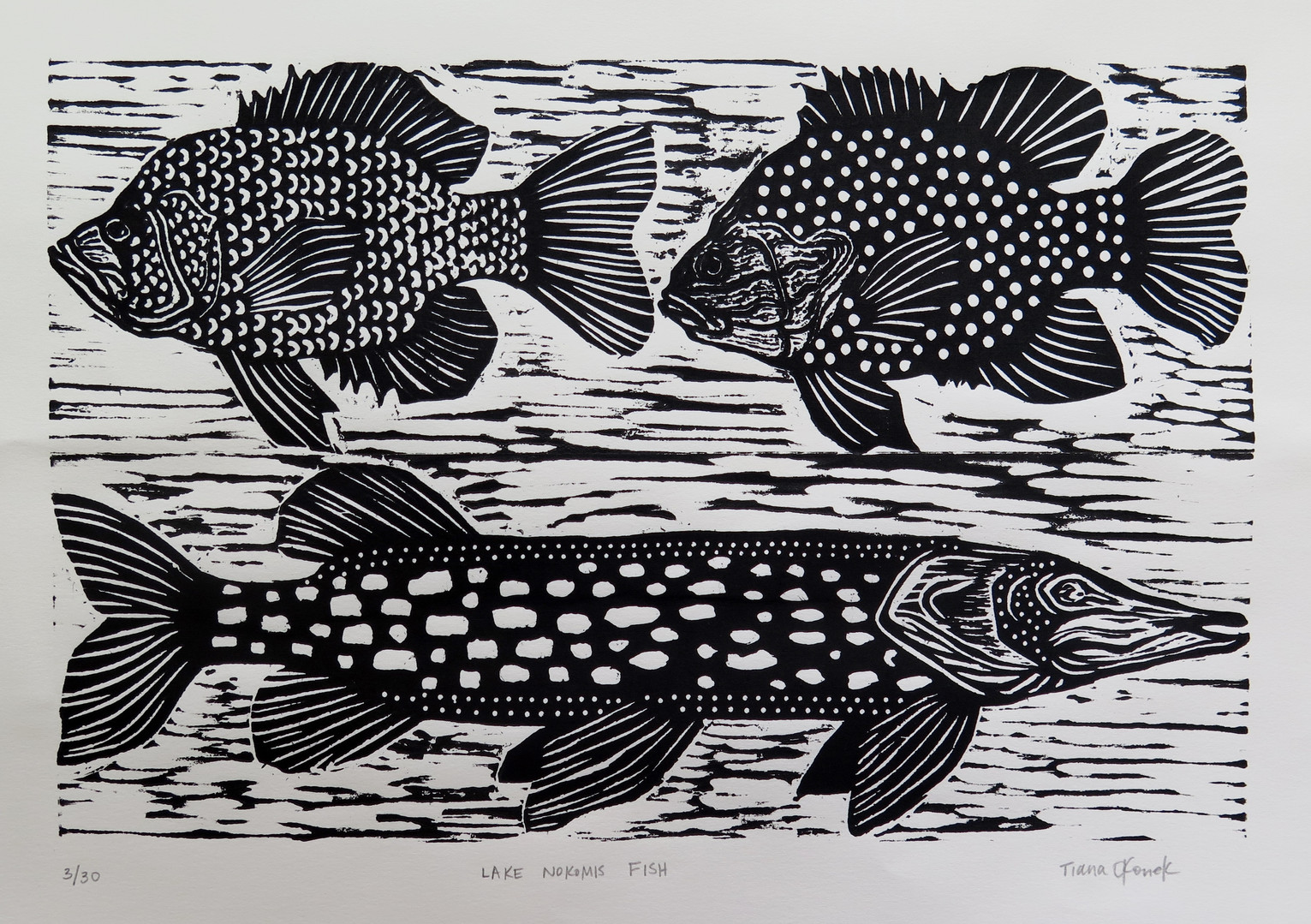 LakeNokomisFish.JPG