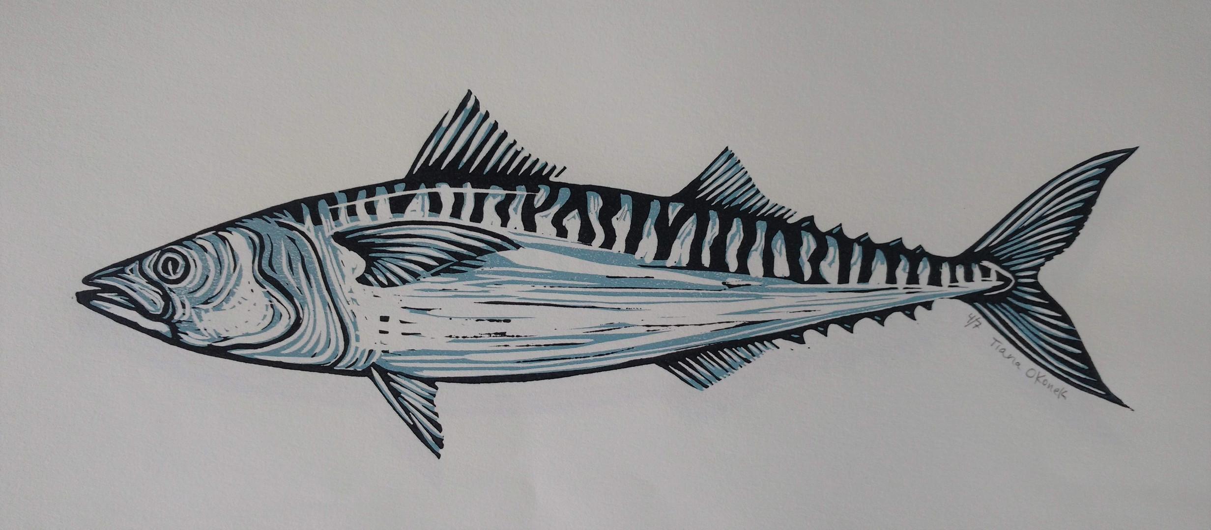 mackerel .jpg