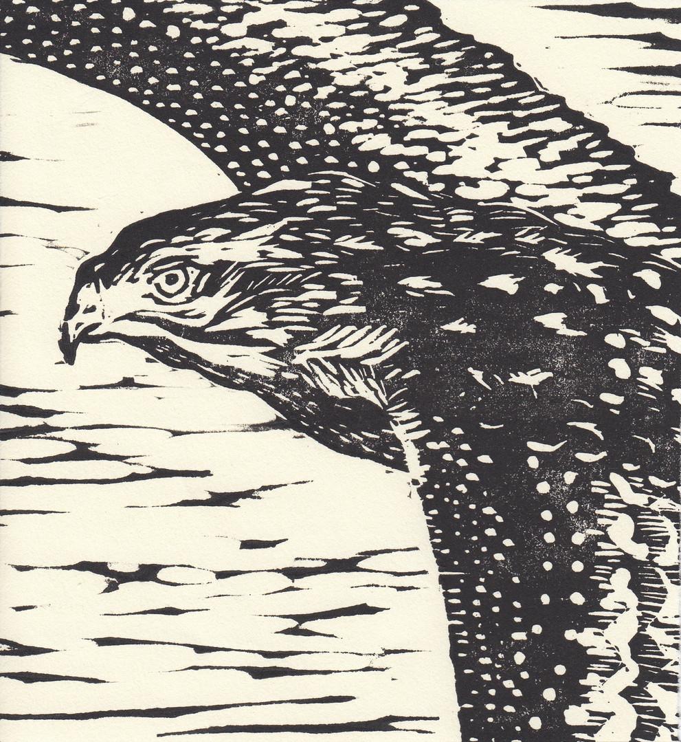 Nokomis Hawk (vertical).jpg