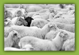 The Heartache of Being a Spiritual Black Sheep