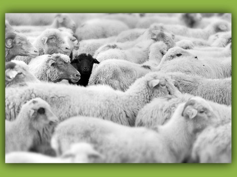 The Heartache of Being a Spiritual Black Sheep