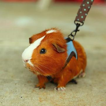 Blog as Guinea Pig