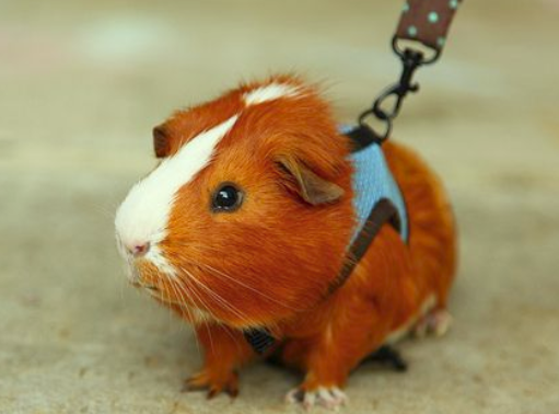 Blog as Guinea Pig