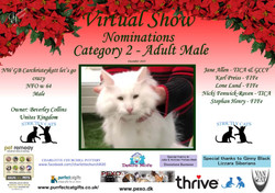 Diploma Strictly Cats Category 2_Page_19