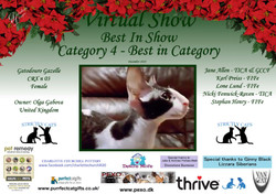 BIS Diploma Strictly Cats Category 4_Pag
