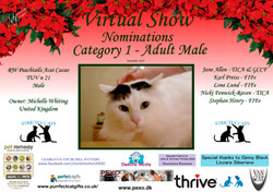 Diploma Strictly Cats Category 1_Page_13