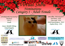 Diploma Strictly Cats Category 1_Page_17