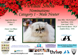 Diploma Strictly Cats Category 1_Page_09