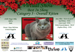 BIS Diploma Strictly Cats Category 3_Pag