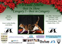 BIS Diploma Strictly Cats Category 5_Pag