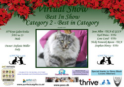 BIS Diploma Strictly Cats Category 2_Pag