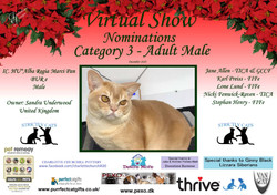 Diploma Strictly Cats Category 3_Page_14