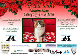 Diploma Strictly Cats Category 1_Page_03