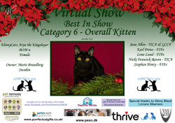 BIS Diploma Strictly Cats Category 6_Pag
