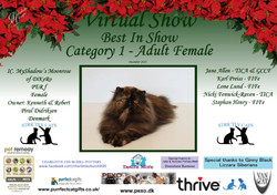 BIS Diploma Strictly Cats Category 1_Pag