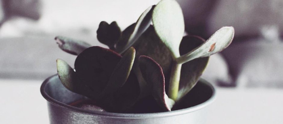 Succulents And The Home