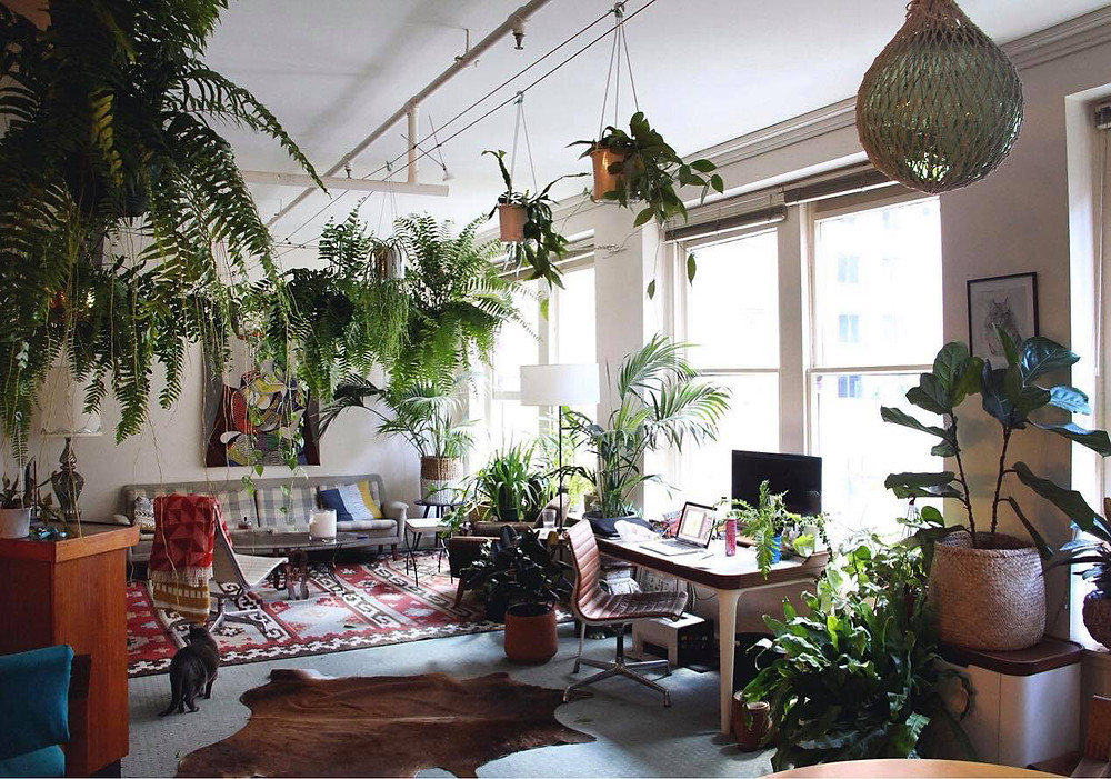interior design plants greenery photography green