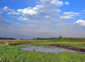 Farmland Colors