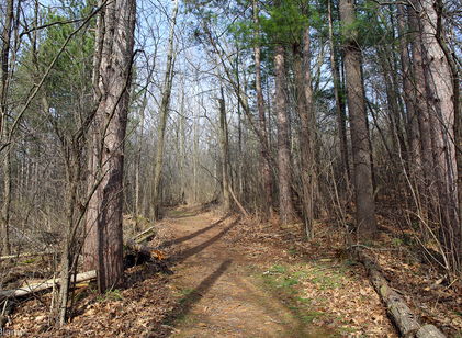 Another Trail