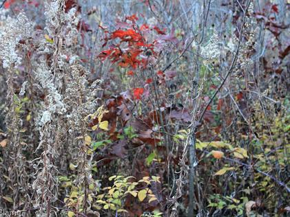 November Patterns