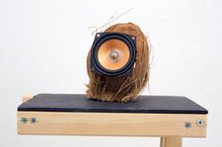 מערכת כריזה (2017), רמקול בתוך אגוז קוקו