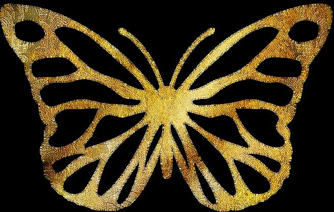 Vlinder Morgen schijnt de zon Papilio Meus