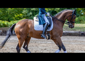 The Top Ten Most Viewed Horse Dressage Videos on Youtube