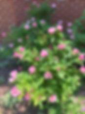 rose garden_edited.jpg