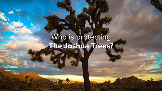 CALL TO ACTION - PROTECT THE WESTERN JOSHUA TREE