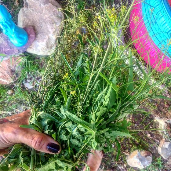 Embracing Invasive Plants.