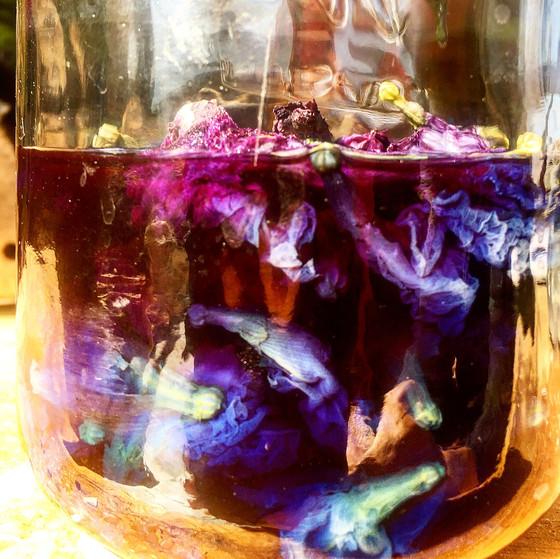 Butterfly Blue Pea Cosmic Goddess