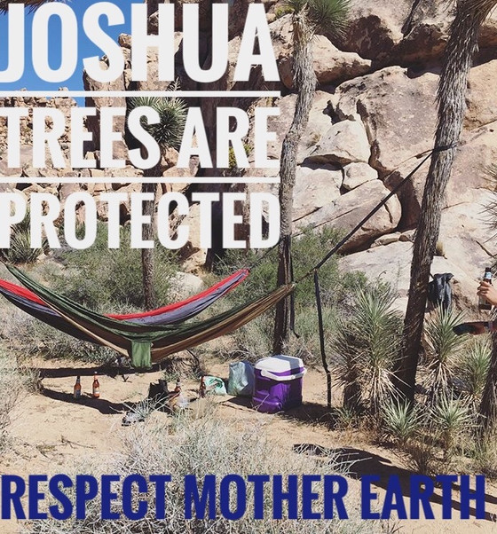 Joshua Trees Need Our Help!