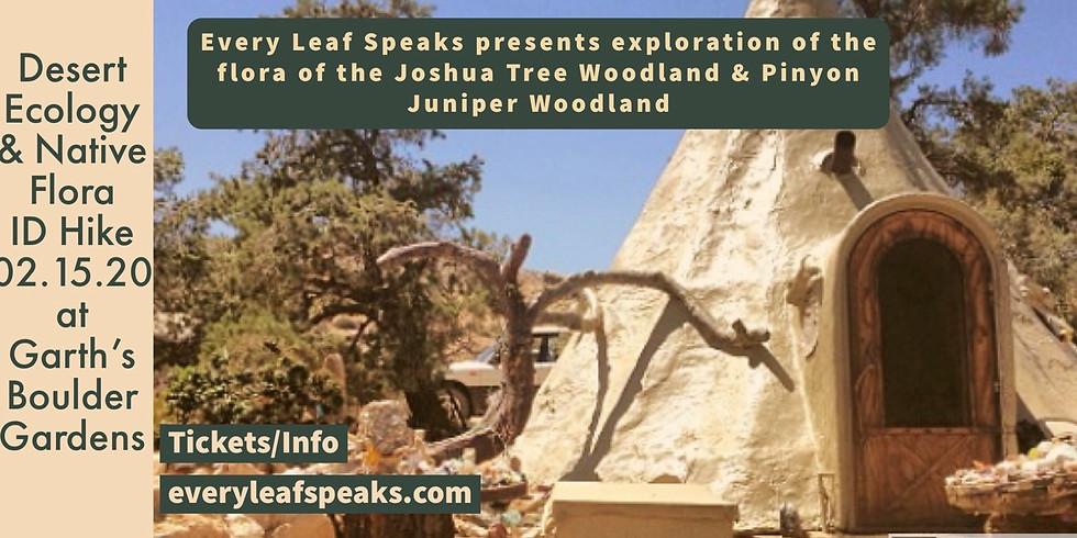 Desert Ecology & Medicinal Flora Hike - Tea Exploration