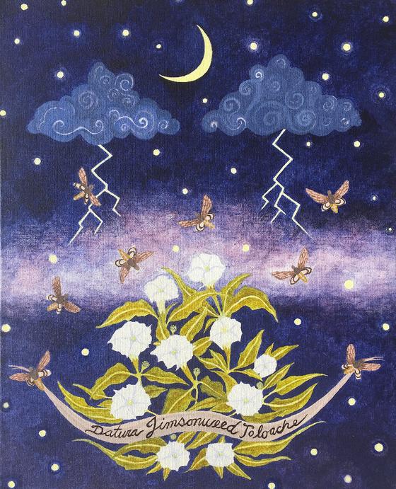 Sacred Medicine - Sacred Datura