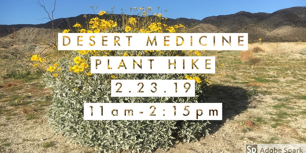 Desert Medicine Plant ID Hike