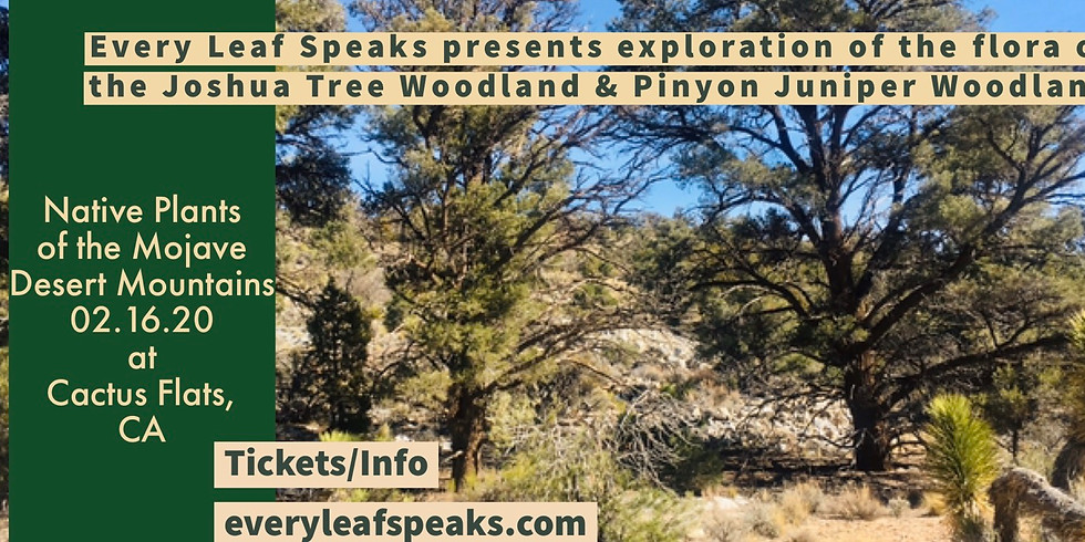 Native Plants of the Mojave Desert Mountains