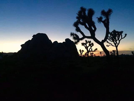 ACT NOW, Help Protect the Mojave Desert Icon JOSHUA TREE Yucca brevifolia! Deadline June 19, 2020