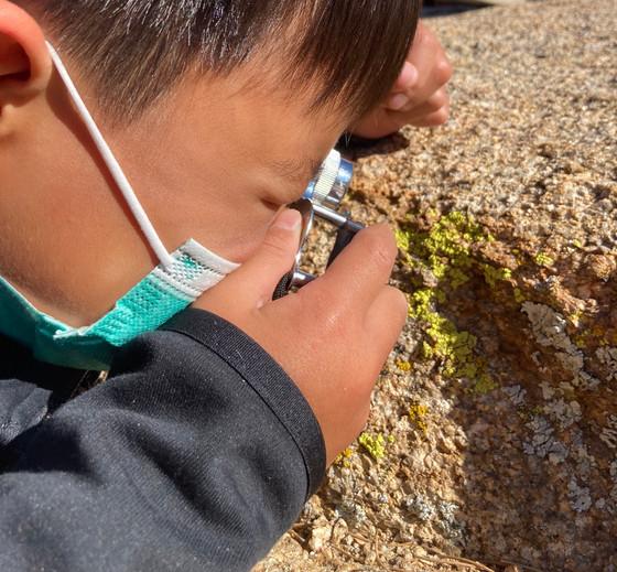 A Little Lichen Curiosity