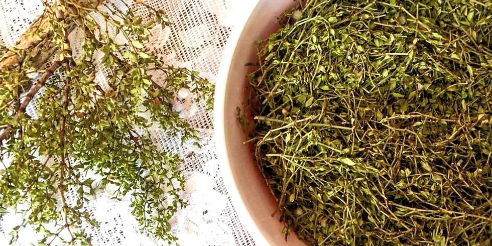 Foundational Herbalism LIVE ONLINE  Series