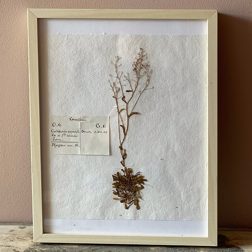 Framed Herbarium