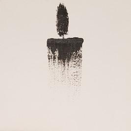 Dan Birenboim, Cypress (From The Hanging Gardens series)