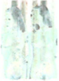 photomontage 6.jpg