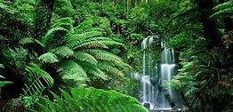 tropical-forest-770x370.jpg