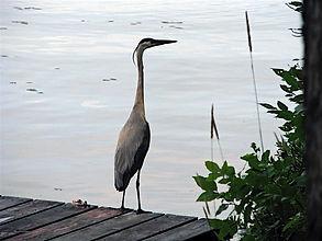 Shadow Lake Coboconk