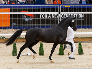 Dettori selected for KWPN test at Ermelo