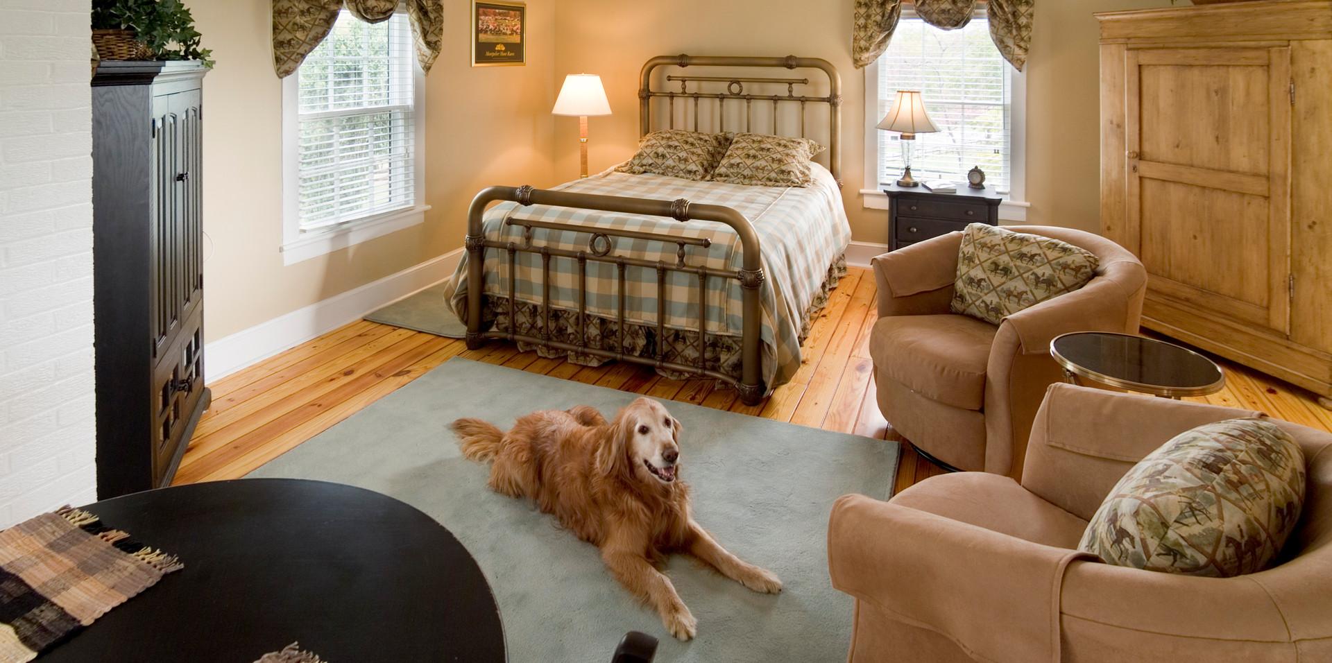 Advertising - Dog in Bedroom WTF MTB 2.j