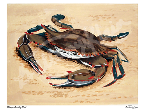 Chesapeake Bay Crab